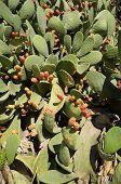 Marco completo de cactus