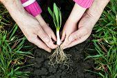 Planting a little plant