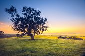 Beautiful South Australian sunrise over rural field