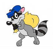 Raccoon Burglar