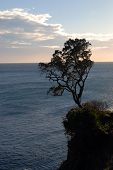 Tree on the cliff over the sea