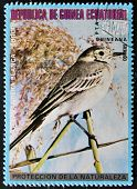 Equatorial Guinea - Circa 1979: A Stamp Printed In Equatorial Guinea Shows A White Wagtail
