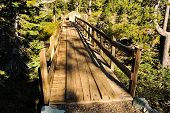 Old Wooden Bridge In Forest With Sunshine