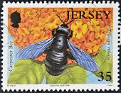 JERSEY - CIRCA 2008: A stamp printed in Jersey shows carpenter bee xylocapa violacea circa 2008
