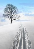 Nordic Ski Track And Tree
