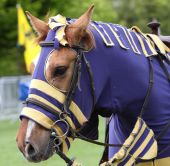 foto of jousting  - a horse dressed for a jousting tournament - JPG