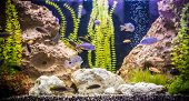 image of freshwater fish  - A green beautiful planted tropical freshwater aquarium with fishes - JPG