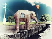 elephant as a house on the cracked road. concept ( photo elements combined).