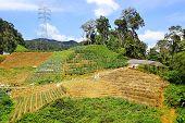 Landscape with plantation.