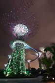 Night Illumination In Gardens By The Bay, Singapore
