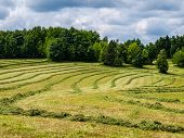 Mowed Field
