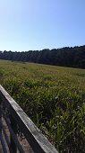 Boone Hall Corn Maze