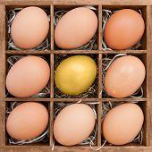 Golden egg among normal egg