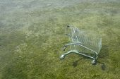 Shopping Cart In Water