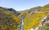 stock photo of trestle bridge  - Railway track of Taieri Gorge tourist railway runs alongside a ravine with bridges and tunnels on its journey up the valley