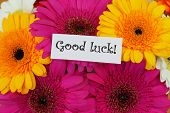 Good luck card with colorful gerberas