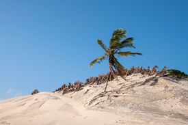 stock photo of rn  - Sand dunes with palms Pititinga Natal  - JPG
