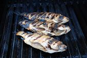 Three Snapper Fish Barbequed On A Grill