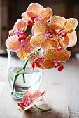 Beautiful Orchids flowers