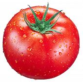 Tomato with water drops on it. Isolated on a white background.