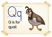 Illustration of a flashcard with letter Q