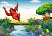 Illustration of an orangutan hanging over a river