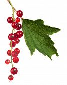 red currants and green leaf isolated on white background
