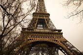 Eiffel tower view with tree branches