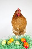 Young Hen With Painted Eggs