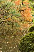 Red maples planted on the shore and reflection in a Japanese garden near Heian Shrine.