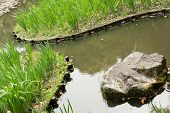 The green grass gardening in the pond of Heian Jingu Shrine in Kyoto.