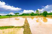Soil For Rice