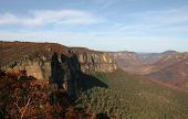 Blue Mountains After Bushfire. Near Blackheath. Australia.