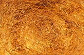 Abstract background texture of golden dry yellow grass, straw and hay outdoor on rural meadow in aut