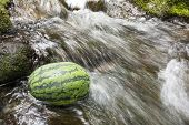 Watermelon in fast stream