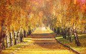 Beautiful autumn alley