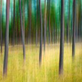 Pine Tree's