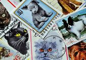 Cats and dogs on stamps