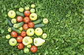 Fruits and vegetables lying in the grass. Cucumbers, tomatoes, peppers, apples.