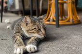 Tabby cat lying under the table to rest in the cat village of Houtong, Taiwan.