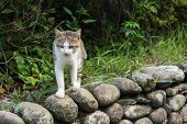 Tabby cat standing on the stone wall in the cat village of Houtong, Taiwan.