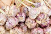 Fresh Young Garlic