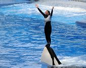 Killer Whale Trainer