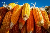 stock photo of corn-silk  - Organic corn on the cob for sale at african market