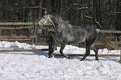 Horse running at wintertime