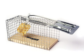 pic of mouse trap  - Scoop mouse or mouse trap before the bomb is done - JPG