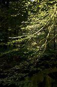tree with bright light
