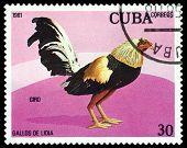 Vintage  Postage Stamp. Giro Cock.