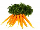 Isolated fresh carrots with foliage