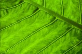 Nature Abstract Background With Green Leaf Texture